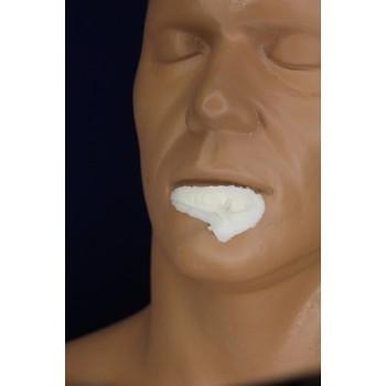 Большая разрезанная губа